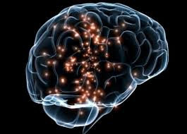 serotonin in brain