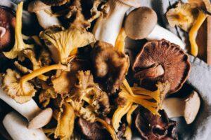 healthiest mushrooms