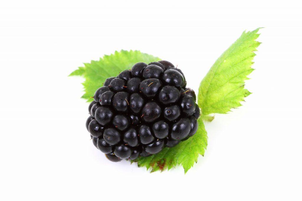 berry 2274 1280